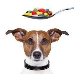 Vitamins for dogs?