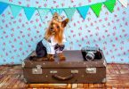 What to bring boarding your dog?