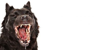 rabies all you need to know