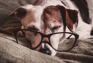 Senior dog, life expectancy of a dog, life span
